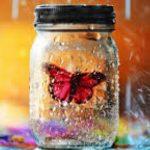 """""""Коллекционер"""" Фаулза: одержимость, бабочки, красота и всякое такое…"""